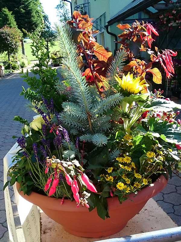 Gestecke - Faller Gartenbau - St. Märgen