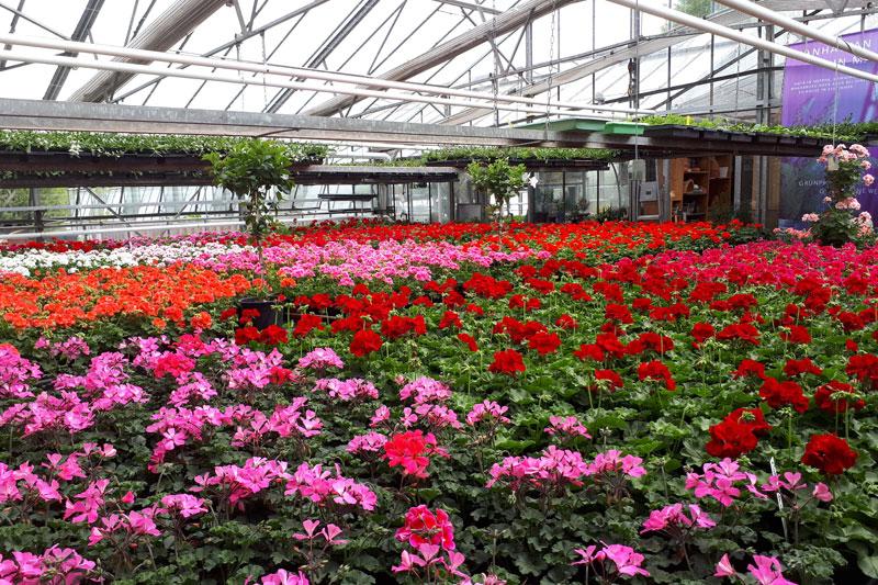 Gärtnerei - Faller Gartenbau - St. Märgen